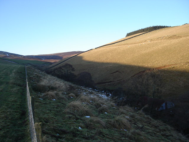 Looking across the Violet Burn to Young Bush Wood on the summit