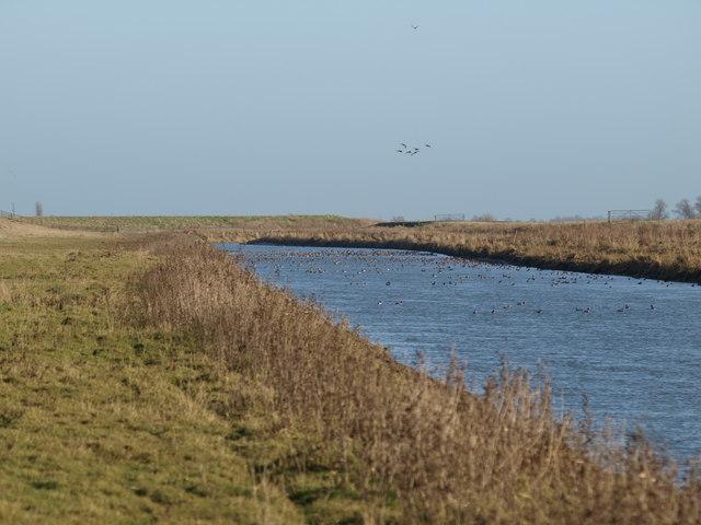Tidal River Nene