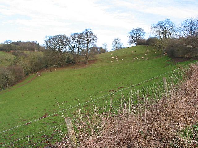 Hillside grazing at Crossington Farm
