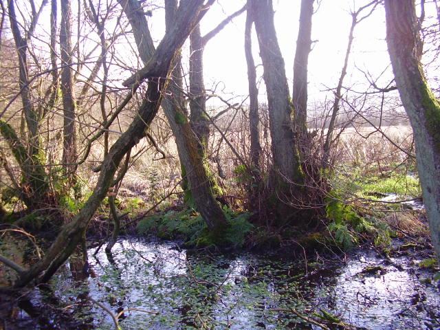 Rhos Goch Common