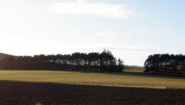 Farmland and Woodland near Dryburn, Glen Ogilvy