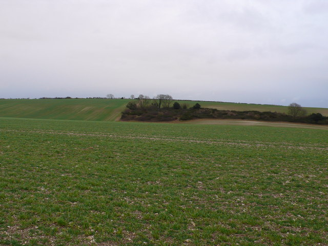 Copse amid winter wheat fields