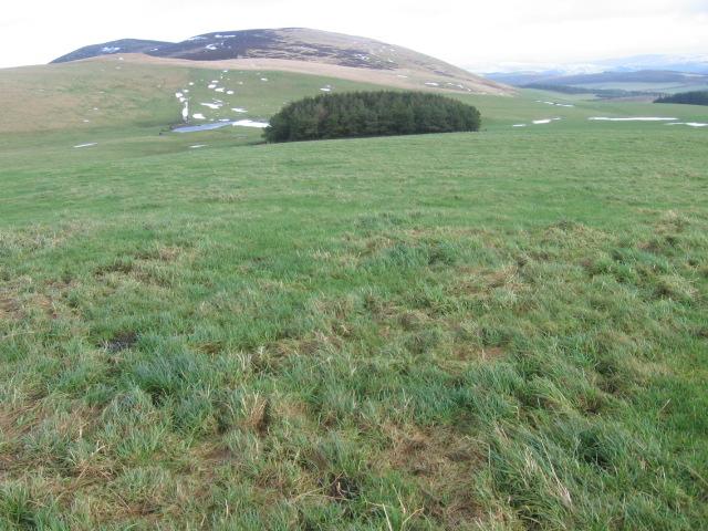 Fields looking towards Black Mount