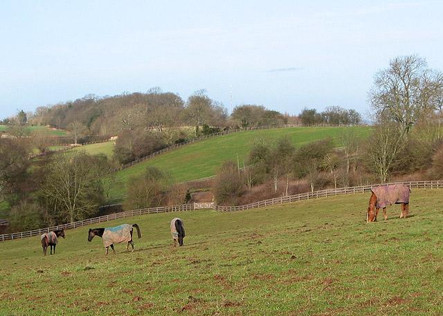 Contented grazers