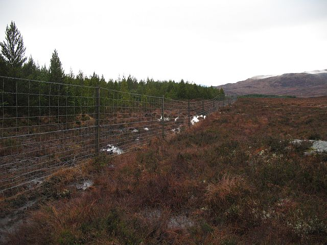 Forest edge, Lochan na Curra