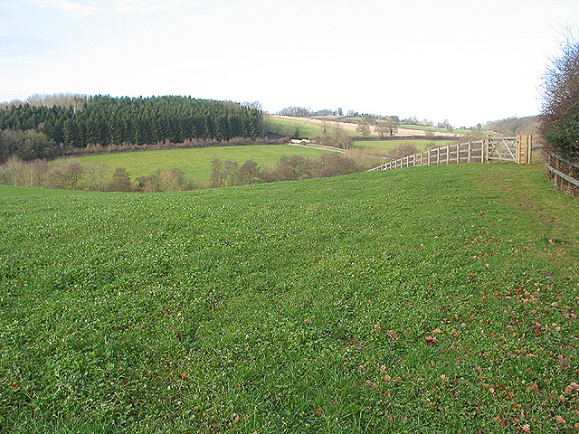 Field of clover by the Herefordshire Trail