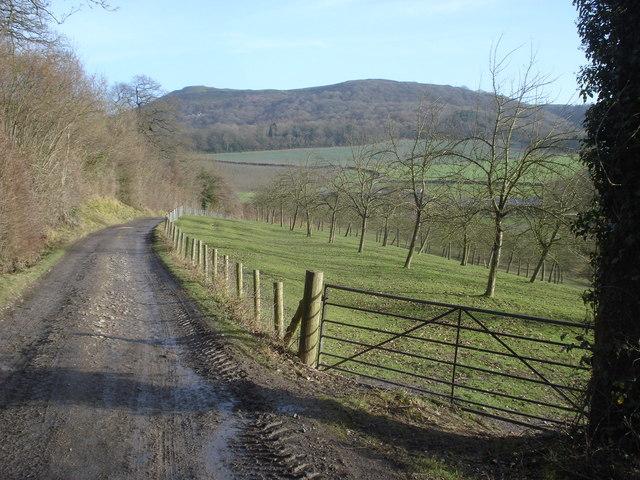 Track to Netherton Farm