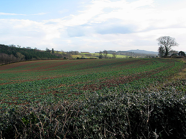 Crop field near Grendon Court
