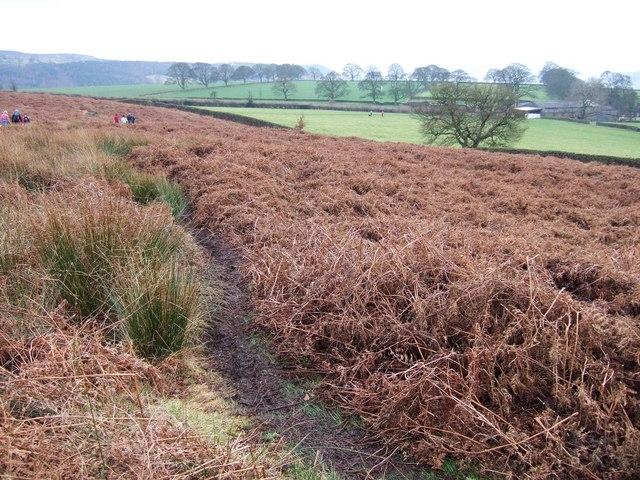 Bracken on access land near Chatsworth