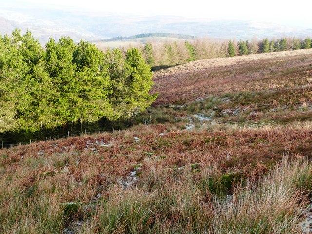 Northern part of Mynydd Llwyd