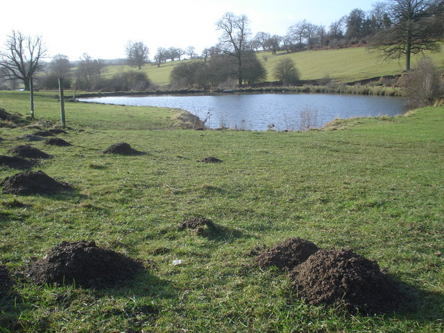 Mole activity at the upper ponds