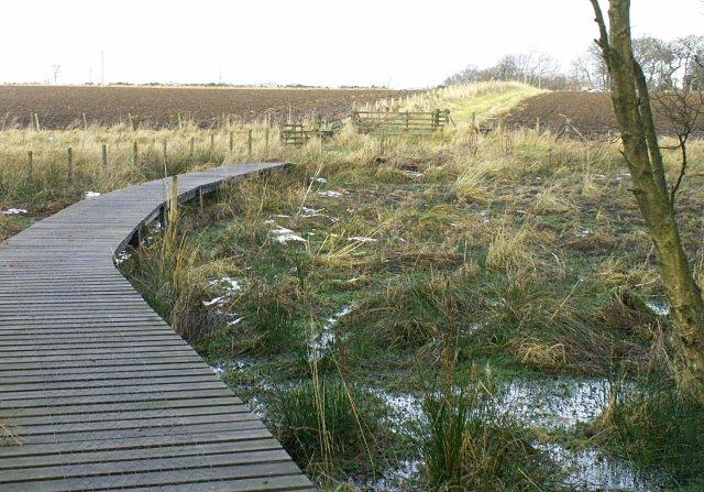 Bankhead Moss