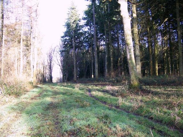 Footpath through Heath Wood