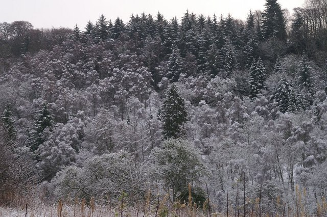 Winter woodland, Craighall, north of Blairgowrie