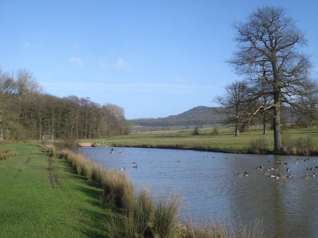 Top pond at Eastnor Park - 2