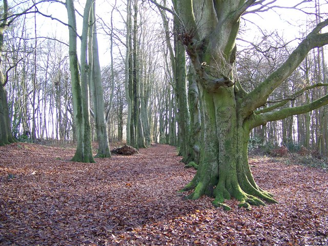 Trees in Heath Wood