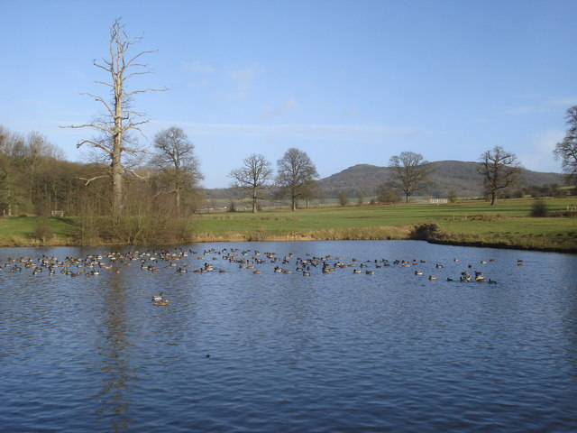 Second pond at Eastnor Park