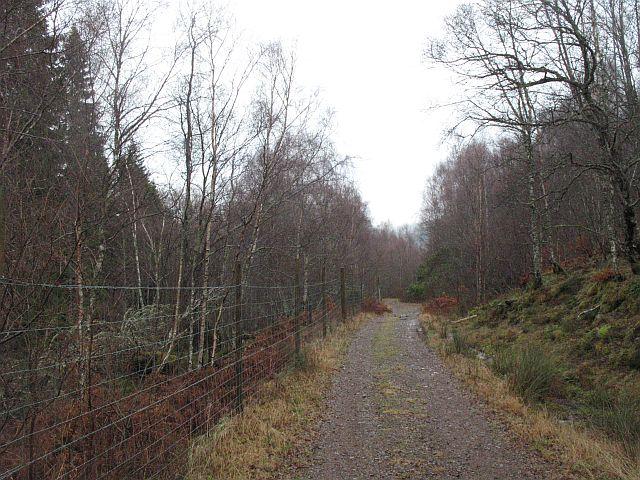 Forest road, Tom a' Bhodaich