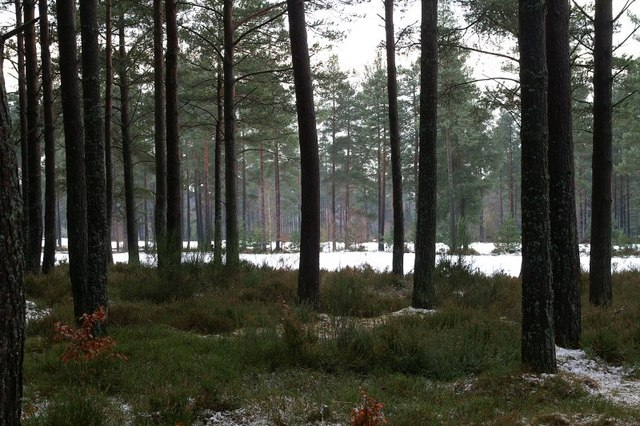 Pinewoods on Blairgowrie Golf Course