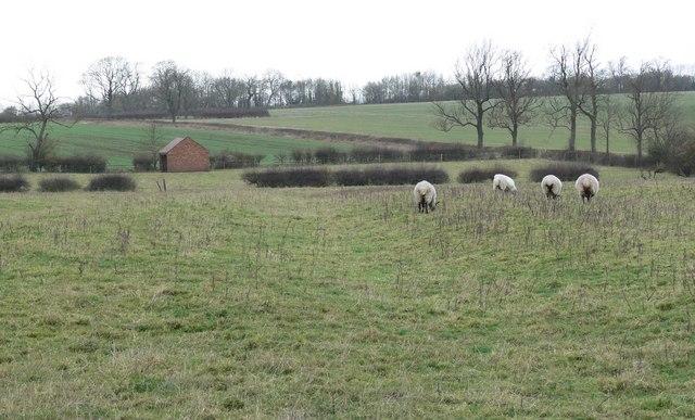 Farmland south of Peatling Magna