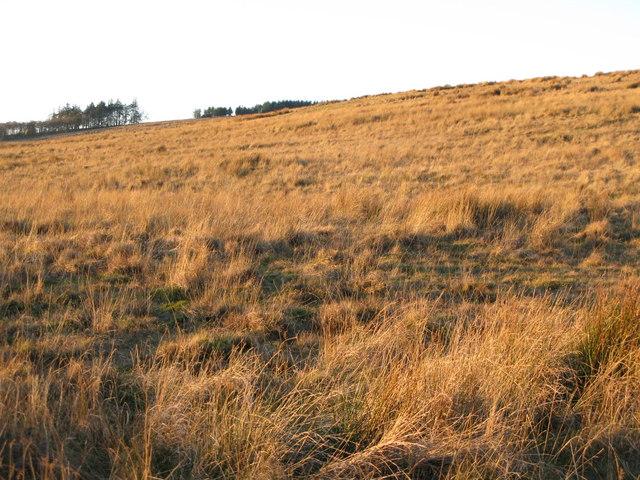 Moorland above War Carr