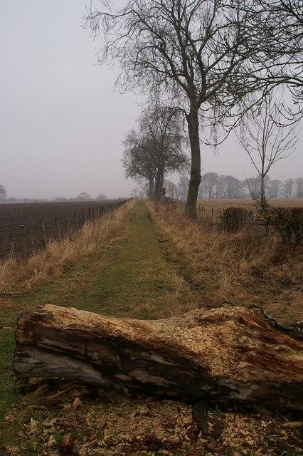 Path to Kitty Swanson's Bridge
