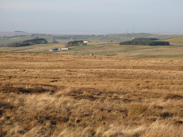 (Part of) Burntridge Moor
