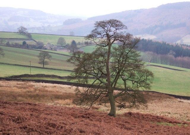 Tree below Rabbit Warren