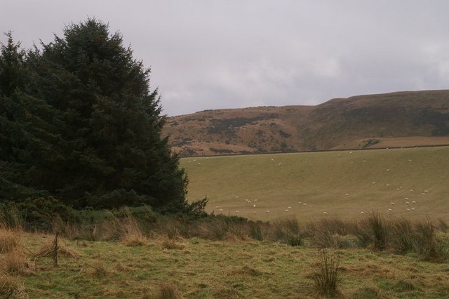 Pinewoods and the Hill of Alyth