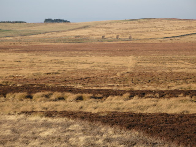 Moorland below Crawberry Hill