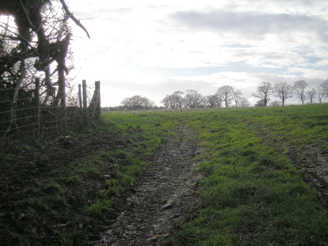 Field with grazing sheep.