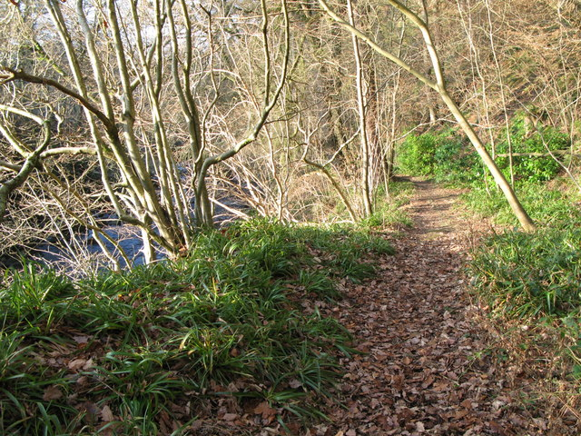 Riverside path by the East Allen near The Holms (4)