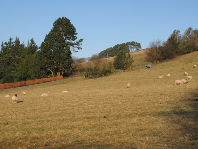 Steep pastures near Allendale Town