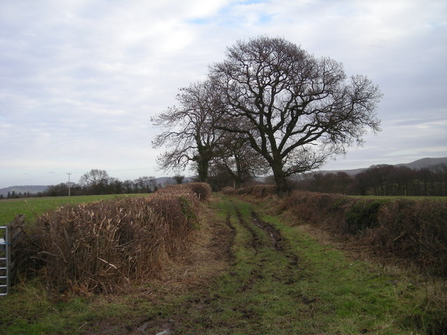 Green Lane to Smethcote Dingle.