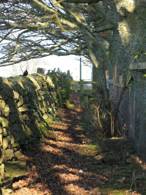 Footpath to Housty (2)