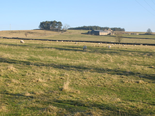 Pastures near Moorhouse Gate