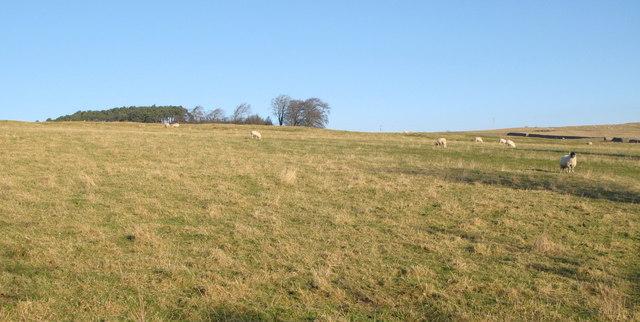 Pastures below The Hope