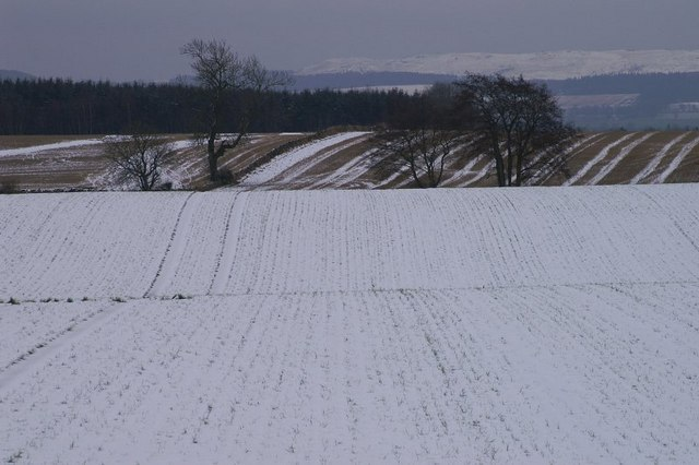 Wintry fields at New Alyth