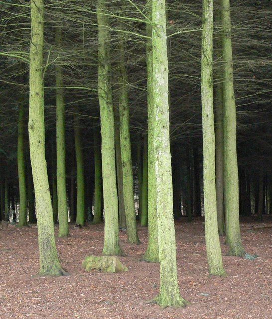 Hurcott Wood