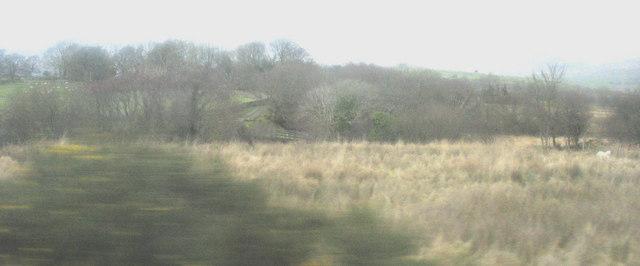 Rough grassland below Clennenau