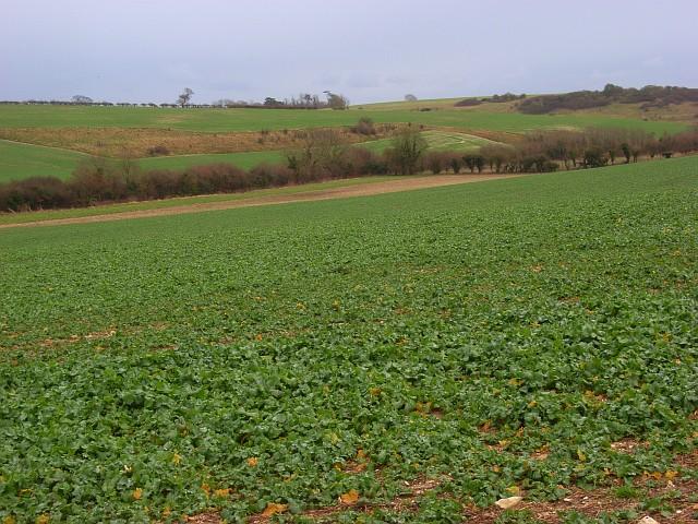 Farmland, Piddlehinton