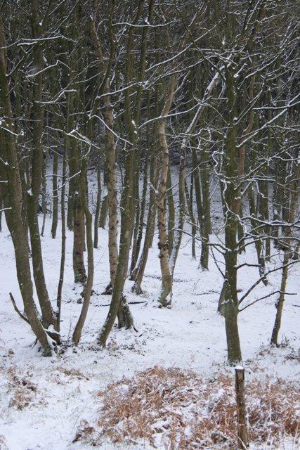 Ayton Banks Wood
