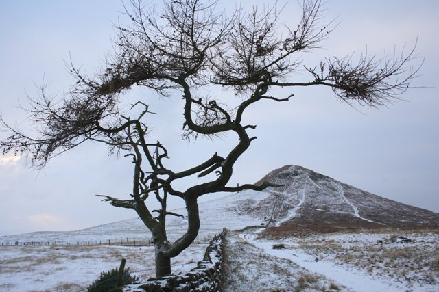 Isolated Tree, Roseberry Common