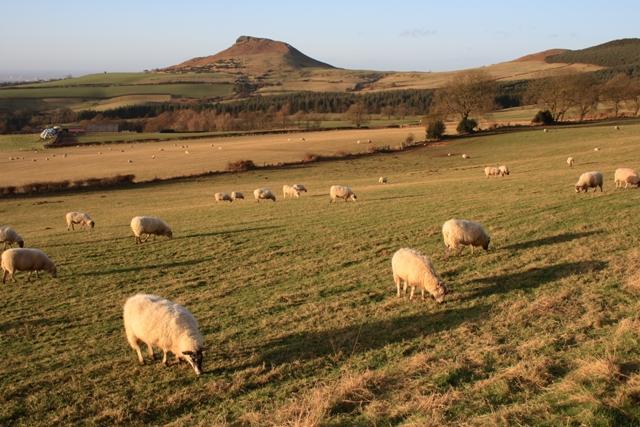 Sheep Pasture, Gribdale