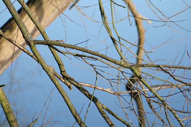 Winter twigs in Colwick Country Park