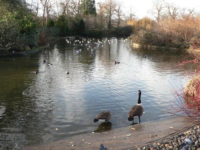 Greenwich Park: duck pond