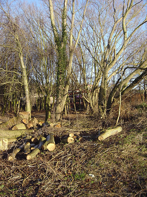 Felled timber in Colwick Country Park