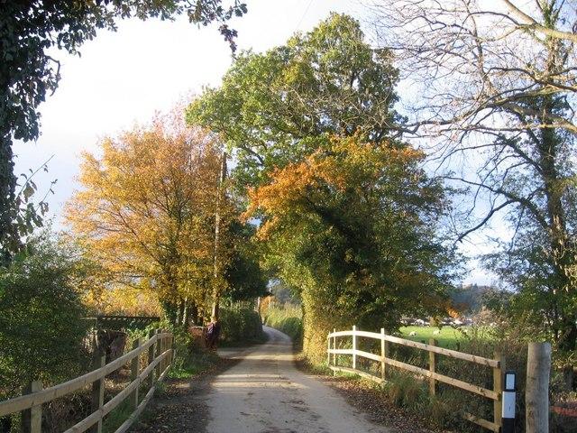 Autumn Lane Scene
