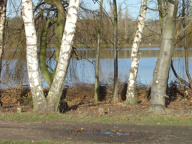 Trees by the west lake in Colwick Country Park
