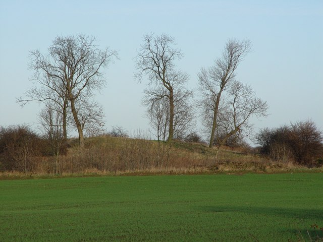 Castle Hill, Swine (2)